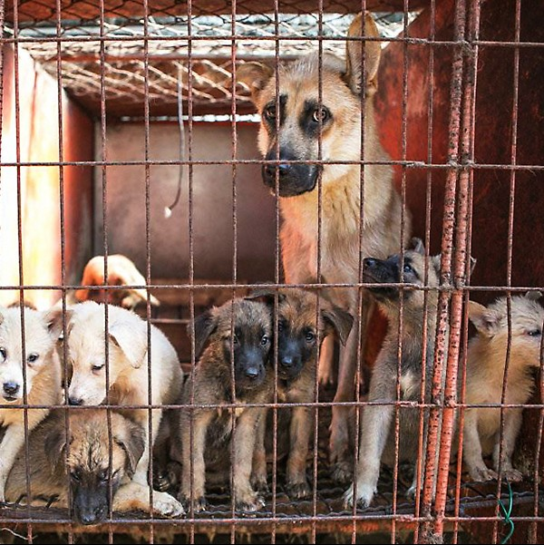 Image result for south korea dog meat farms